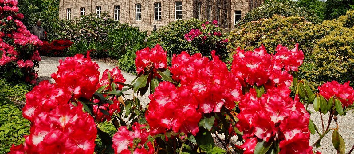 Rhododendrongarten - Video