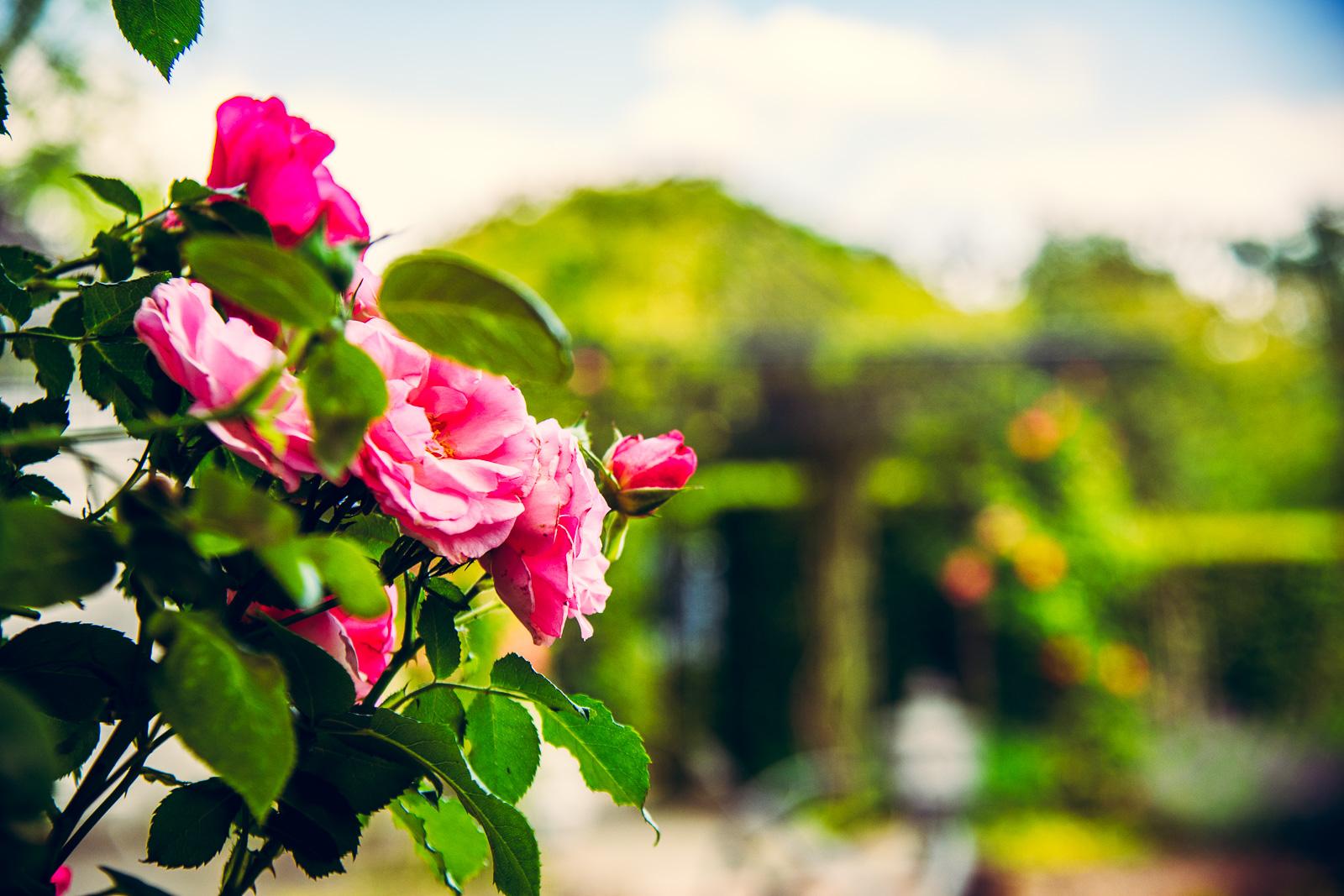Sommerblüte in Ihrem Garten!