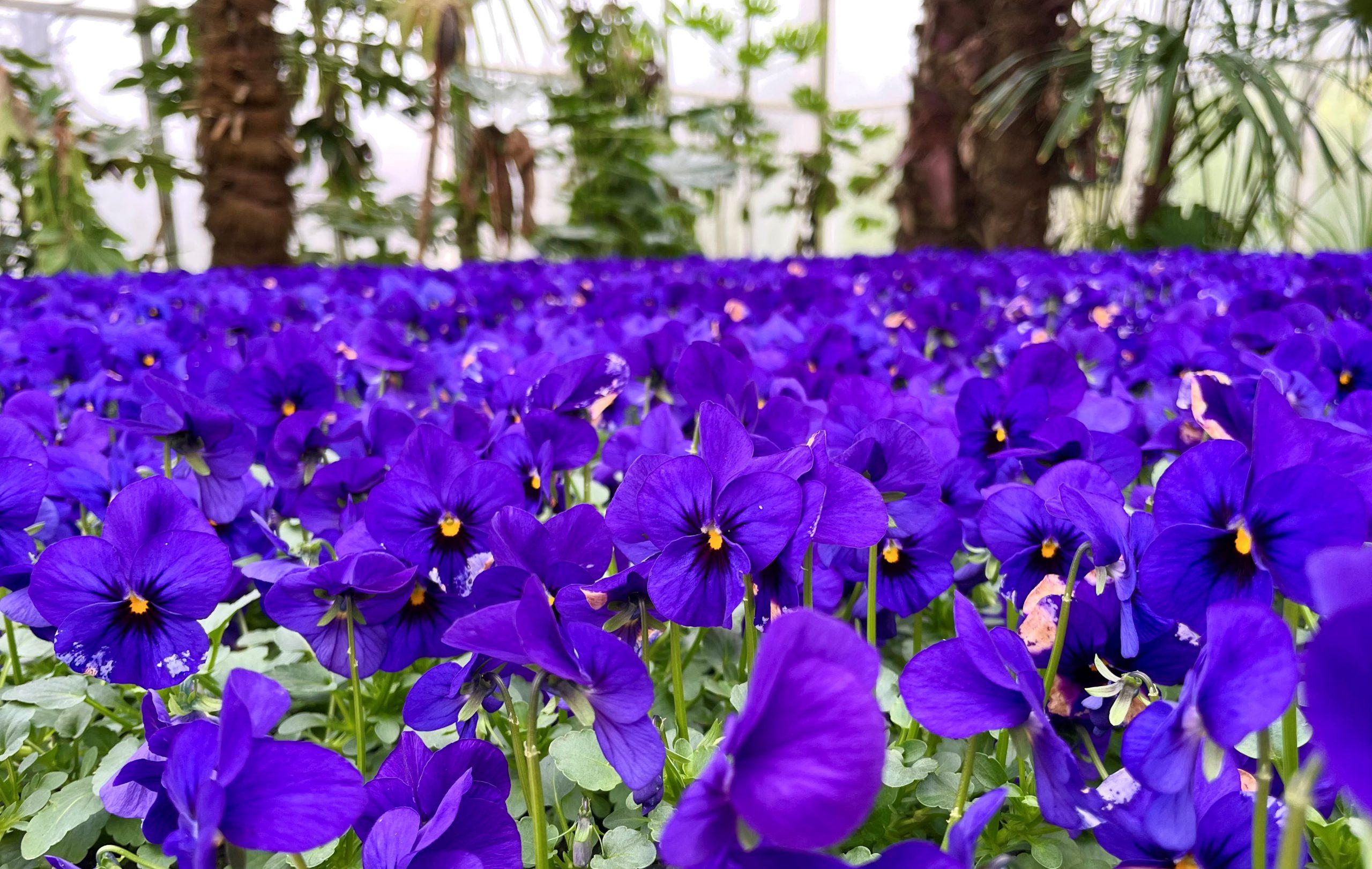 Kasteeltuinen Arcen brengt het voorjaar bij jou thuis